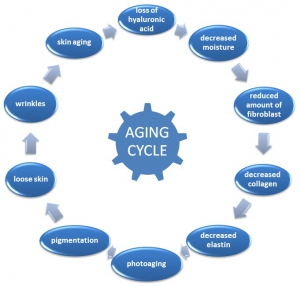 aging-cycle